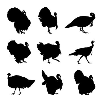 Turkey silhouette set
