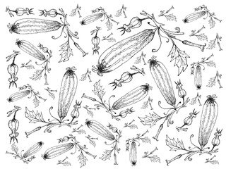 Hand Drawn of Fresh Zucchini Fruits with Flowers Background