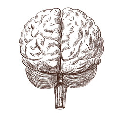 Schematic representation of the human brain on the white background