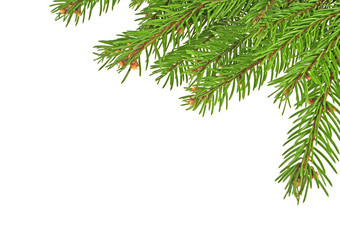 Christmas tree branches isolated on a white background
