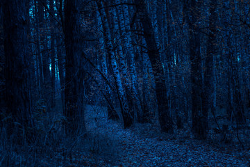 trail through a fantastic night forest of autumn