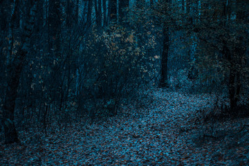 night in the mysterious autumn forest