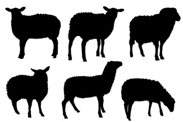 sheep silhouettes