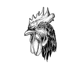 hand drawn rooster head illustration