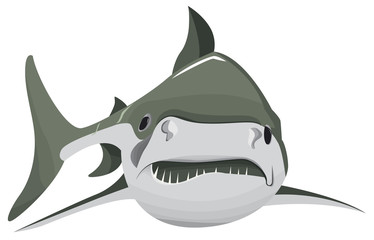 Un grand requin seul