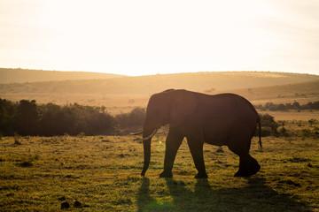 Addo Nationalpark, Südafrika