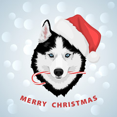 Dog portrait in a red Santa's hat with candy in mouth. Black and white Siberian husky with blue eyes. Merry Christmas and Happy New Year. The dog is a symbol of 2018. Vector illustration