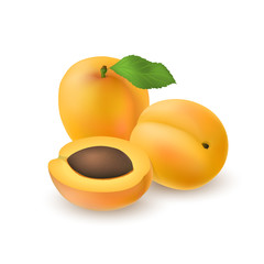 Isolated realistic colored two whole juicy apricots with stick and leaf and half apricot with pit with shadow on white background. Side view.