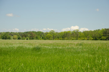 Green meadow in front of the forest
