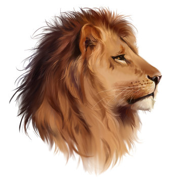 The head of a  lion watercolor painting