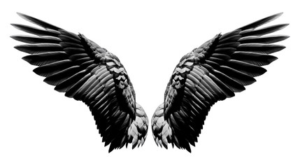 Angel wings, Natural black wing plumage isolated on white background with clipping part Wall mural