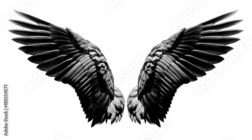 Wall mural Angel wings, Natural black wing plumage isolated on white background with clipping part