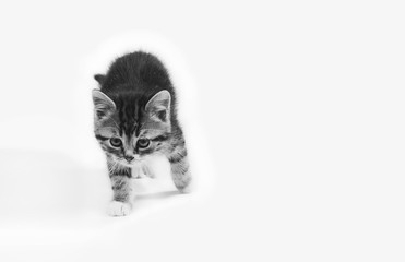 cute little kitten on a white background, a black and white photo. mock up for text, congratulations, phrases, lettering
