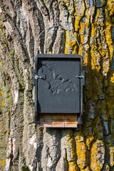 Artenschutz für Fledermäuse