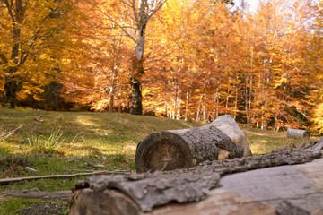 Autumn trees pattern.