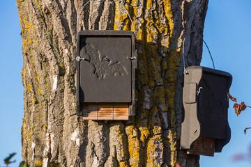 Fledermaus Nistplatz an einem Baum