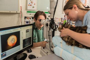 Ophtalmologie vétérinaire, préserver les yeux des animaux  comme les humains.