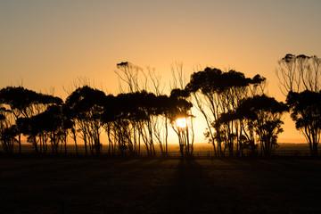 Sonnenaufgang in der afrikanischen Steppe