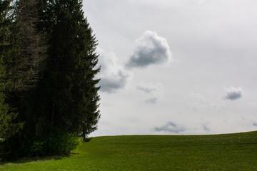 Wald, Wiese, grauer Himmel