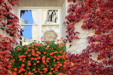 Windows with Red Flowers and leaves in the centre of Bressanone / Brixen. South Tyrol, Italy.