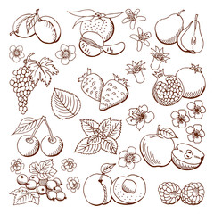 fruits and berries. illustration.Design elements.