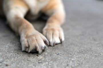 Lovely dog paws