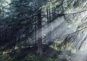 Fantastic forest glowing by sunlight. Location: Carpathian, Ukraine, Europe.
