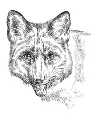 Vector portrait of fox