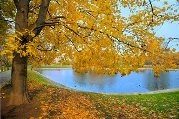 Autumn landscape of city park with golden tree and pond