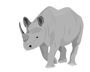 rhinoceros vector design