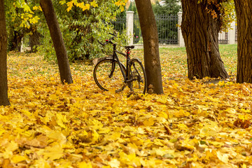 Girl cyclist rests on a bright autumn foliage under a tree next to his bike in a city park. Autumn scenery of city park