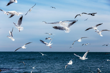 Hungry gulls circling over the winter beach in search of food on a background of sea and blue sky. Sea birds in flight in search of food.