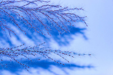 design flowers grass has blue image