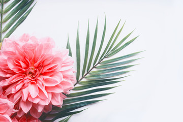 Wall Mural - Pink flowers and tropical leaves on on white desktop background, top view, creative layout with copy space, border, close up