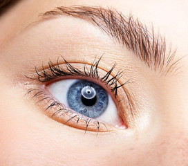Closeup macro portrait of female face. Human woman blue eye with day beauty makeup and long natural eyelashes