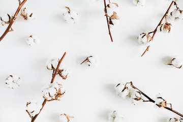 Cotton branches and buds on white background. Flat lay, top view.