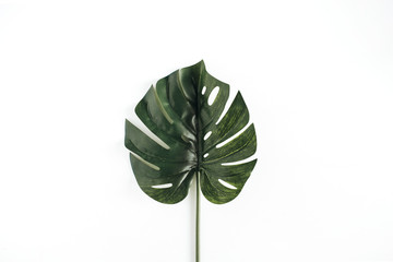 Monstera leaf. Minimal flat lay, top view background.