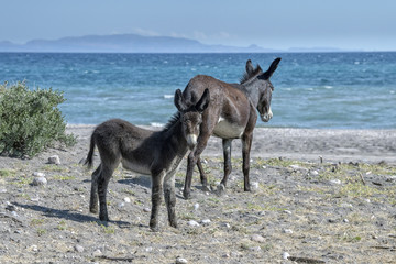 young donkey in california desert