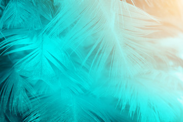 Green turquoise and blue color trends feather texture background,Light orange