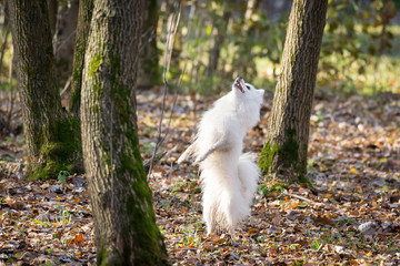 white dog jumping in the park