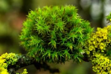 Little Moss World