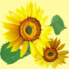 Hand drawn sunflowers with leaves isolated on beige background.
