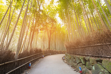 Bamboo forest and walk path, tropical natural forest, Japan