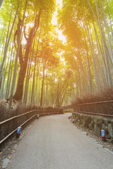 Walk way leading to Bamboo forest in Kyoto Japan, natural landscape background