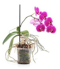 Bouquet of orchids.