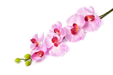 Artificial flowers for design and home decoration - orchid isolated on white background