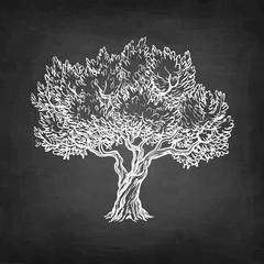 Chalk sketch of olive tree.
