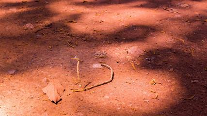Close up Dirt road stretching through Cambodian jungle beside castle. Siem Reap, Cambodia. Landscape in jungle, Southeast Asia.