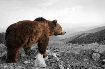 Wall Mural - Black and white photography with color bear