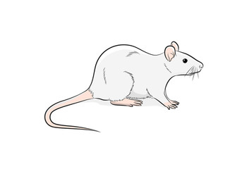 Domestic Mouse Vector Illustration
